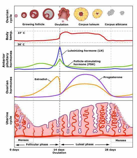 جزوه کنکوری زیست - مبحث تولید مثل جانوری ویژه کنکور-img